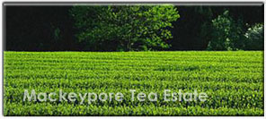 Mackeypore Tea Estate